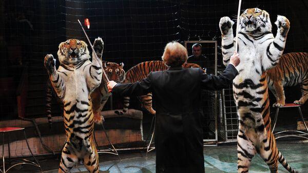 Тигры в цирке. Архивное фото