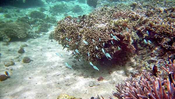 Кораллы на Фиджи