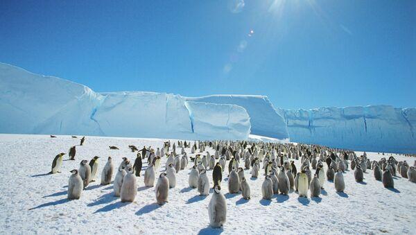Колония императорских пингвинов в Антарктиде, архивное фото