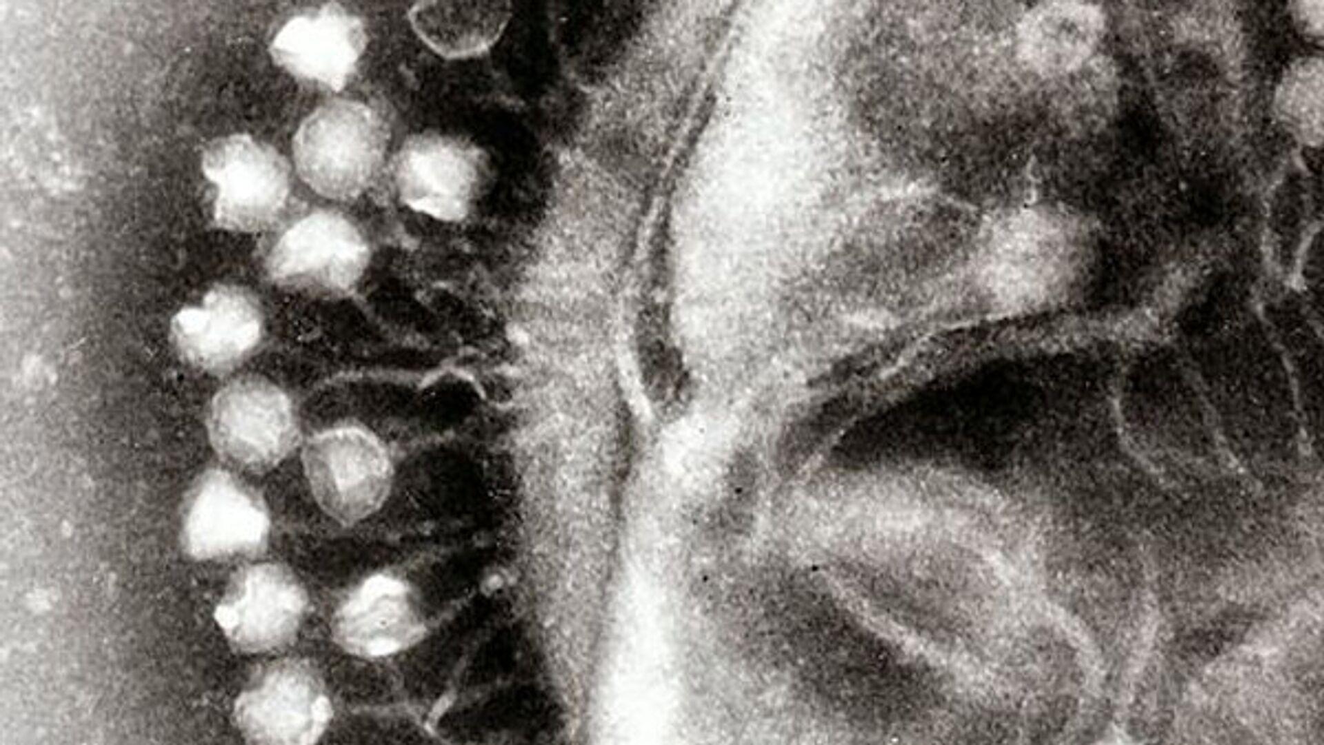 Ученые обнаружили 140 тысяч видов вирусов в кишечнике человека