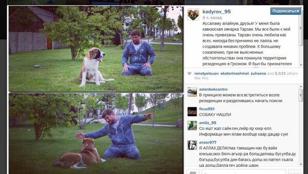 Скриншот Instgram Рамзана Кадырова с объявлением о пропаже его собаки