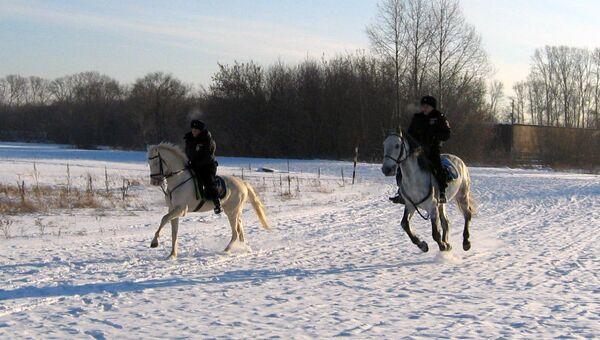 Новосибирская полиция купила коней генетически расположенных к служб