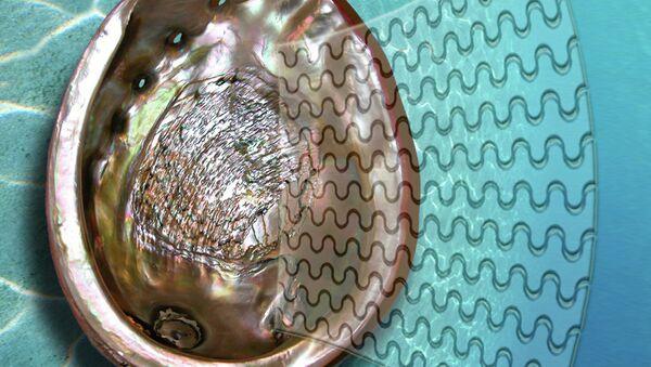 "Раковина моллюска (на заднем плане) и стекло, изготовленное по тем же ""технологиям"""
