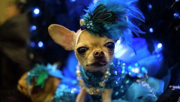 Собака на выставке Pet Fashion Show в Нью-Йорке