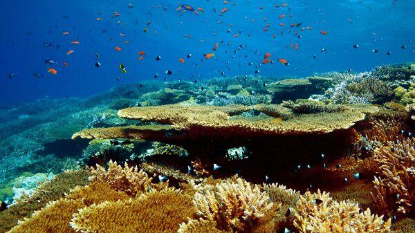 Дайвинг в Красном море на территории Национального заповедника Набк