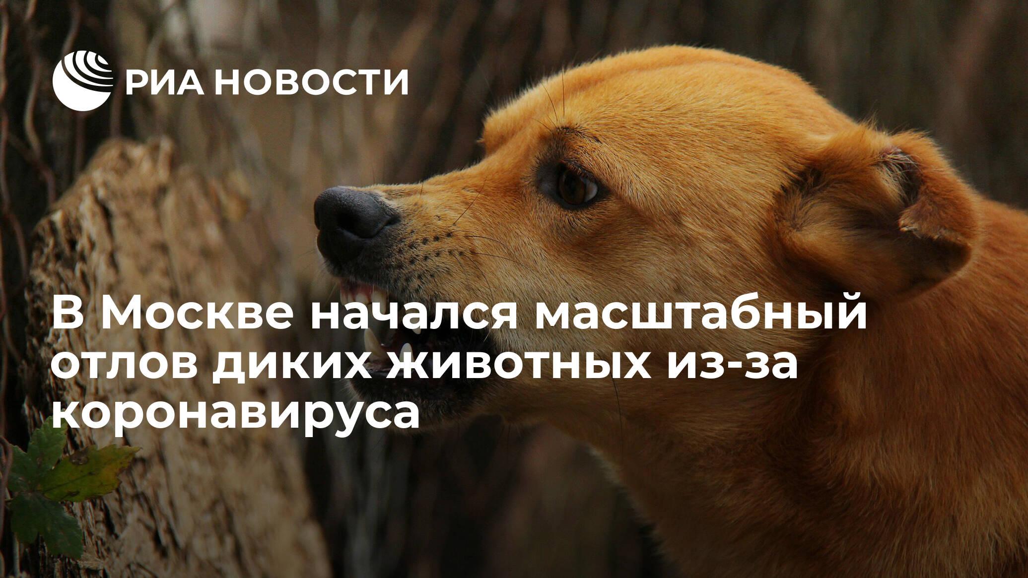 коронавирус собак возбудитель
