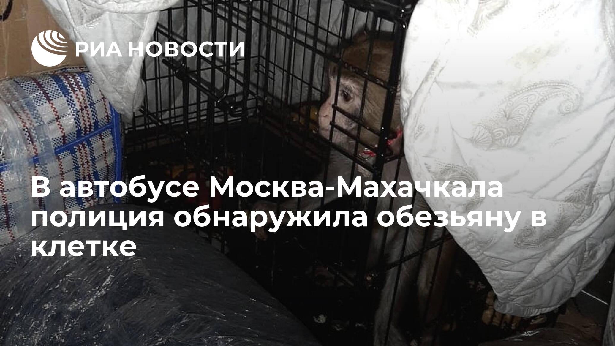 В автобусе Москва-Махачкала полиция обнаружила обезьяну в клетке
